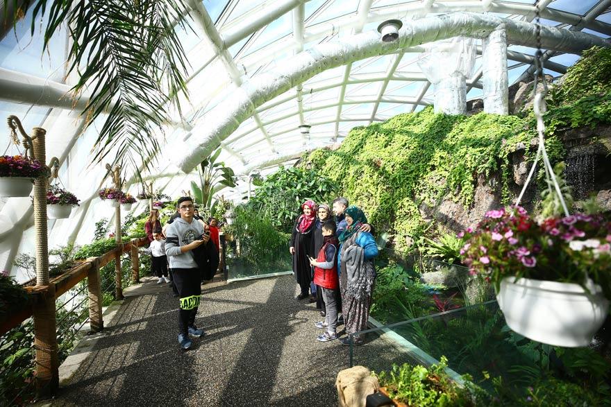 Konya Tropikal Kelebek Bahçesi'nden renkli görüntüler 1