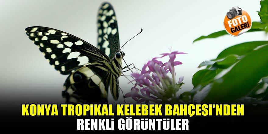 Konya Tropikal Kelebek Bahçesi'nden renkli görüntüler