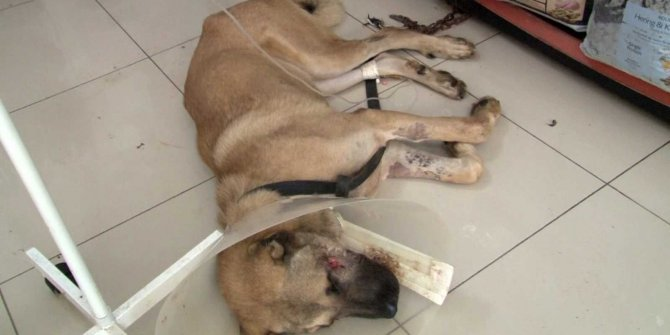 Köpeğe silahlı saldırı