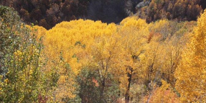 Sonbahar ile renk cümbüşü yaşanıyor