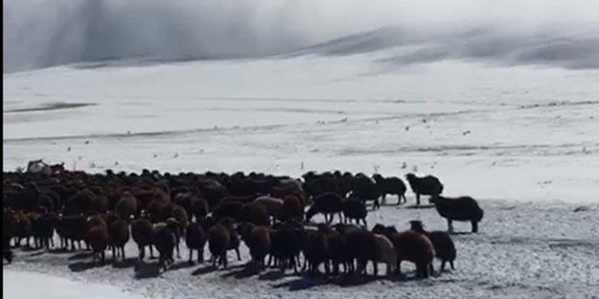 Kar nedeniyle yaylada mahsur kalan çoban ve sürüler kurtarıldı