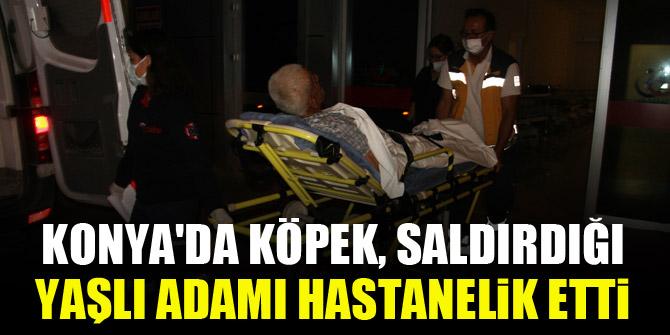 Konya'da köpek, saldırdığı yaşlı adamı hastanelik etti