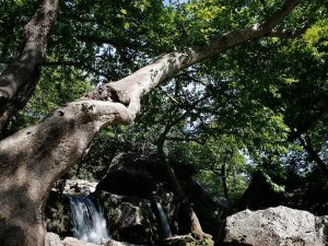 Anadolu 'doğal park' zengini