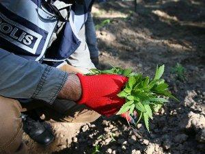 Hevsel Bahçelerinde uyuşturucu operasyonu