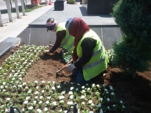 Aksaray Belediyesi milyonlarca çiçeği toprakla buluşturdu