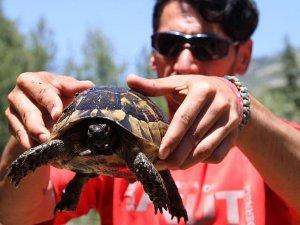 Boruya sıkışan kaplumbağalar kurtarıldı