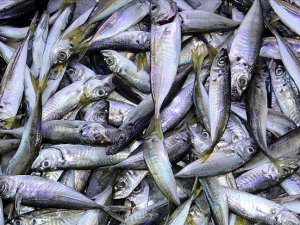 SKorea, UN clamp down on illegal Chinese fishing