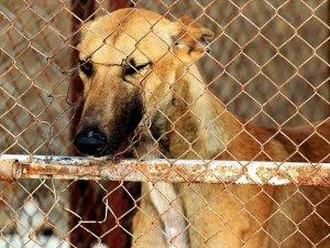 Köpekler için 11 milyon imza toplandı
