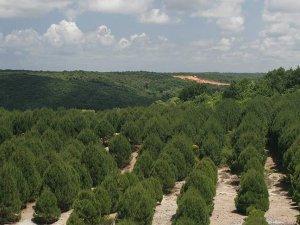 İstanbul'da bu yıl 150 bin ağaç dikilecek