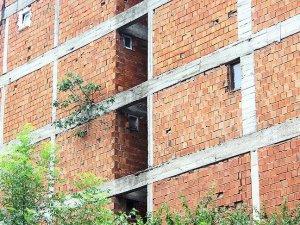 Binanın dış cephesinde incir ağacı yetişti