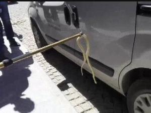 Tekerleğe giren yılanı esnaf çıkarttı