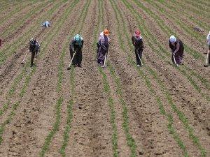 Bakanlıktan kadın çiftçilere 'pozitif ayrımcılık'