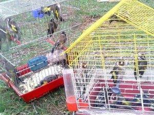 Kuş kaçakçısına 460 bin lira ceza uygulandı
