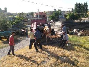 Seydişehir'de köylüye süt ineği dağıtıldı