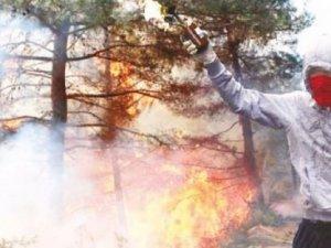 PKK'nın yeni hedefi milli ormanlar