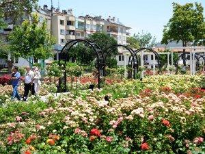 Kültürpark Gülbahçe'de güllerin ahengi