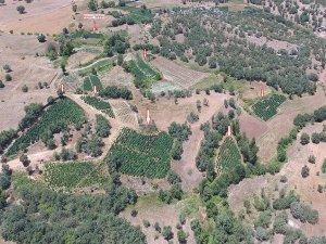 Diyarbakır'da 43 milyon 920 bin kök Hint keneviri ele geçirildi