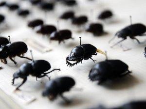 Emekli profesör 25 bin böceklik koleksiyon oluşturdu