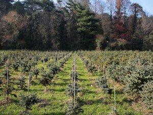 Hindistan ağaç dikmede dünya rekorunu hedefliyor