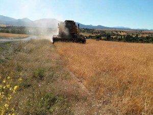 Konya'da buğday hasadı başladı