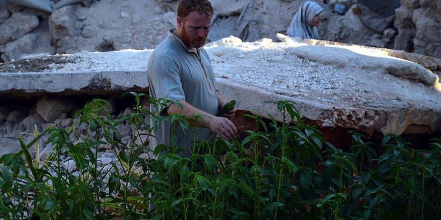 Halep'te 'yıkıntılar arasında' sebze bahçesi