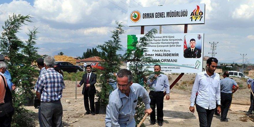 Şehit Ömer Halisdemir'in adı hatıra ormanında yaşatılacak