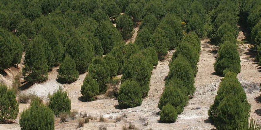 'Kahraman Kazanlılar' için şehitler ormanı kurulacak