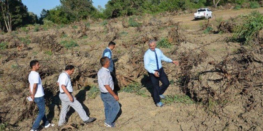 Mersin'de 152 hektar alanda endüstriyel ağaçlandırma çalışmaları yapılıyor