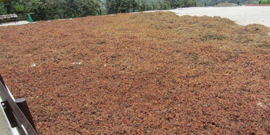 Fındık üreticisi aflatoksin konusunda uyarıldı