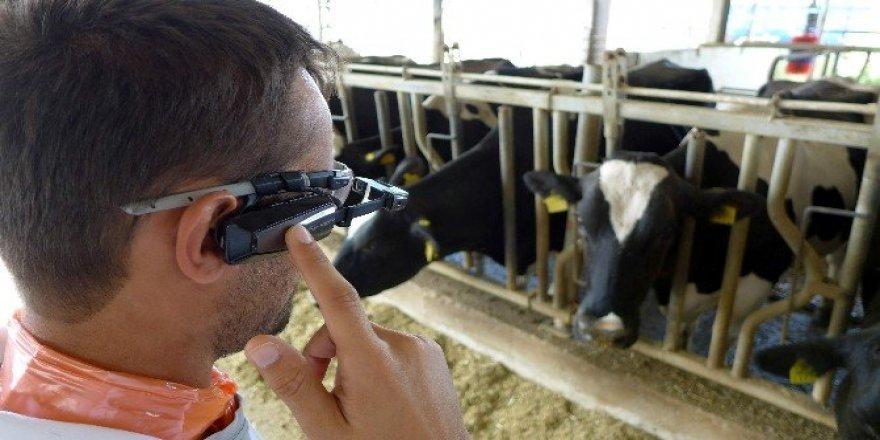 Hayvancılık sektöründeki zararlar akılı gözlüklerle tespit edilecek