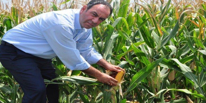 """CHP'li Tümer: """"TMO, mısır taban fiyatını zamanında açıklamalı"""""""