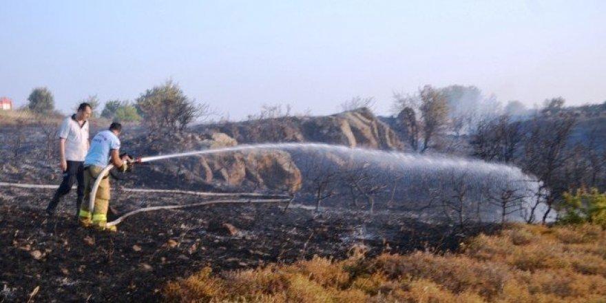 Endemik bitkiler yandı