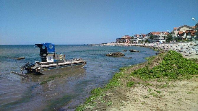 Kocaeli sahillerinde 10 ton yosun toplandı