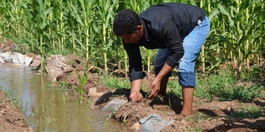 Elektrik borcu bulunan çiftçiler için son fırsat