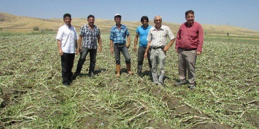 Sandıklı'da dolu ve şiddetli yağış tarım ürünlerine zarar verdi