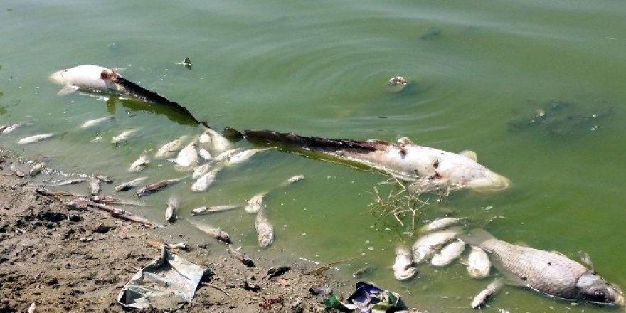 Karaahmetli Göleti'nde çok sayıda balık kıyıya vurdu