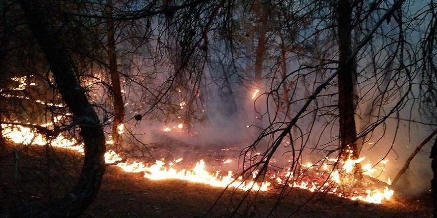 Çorum'da 60 hektar ormanlık alan yandı
