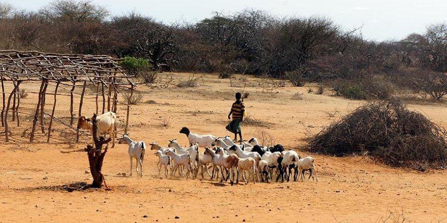 Türkiye'den Afrika'ya 'kuraklık stratejisi' desteği