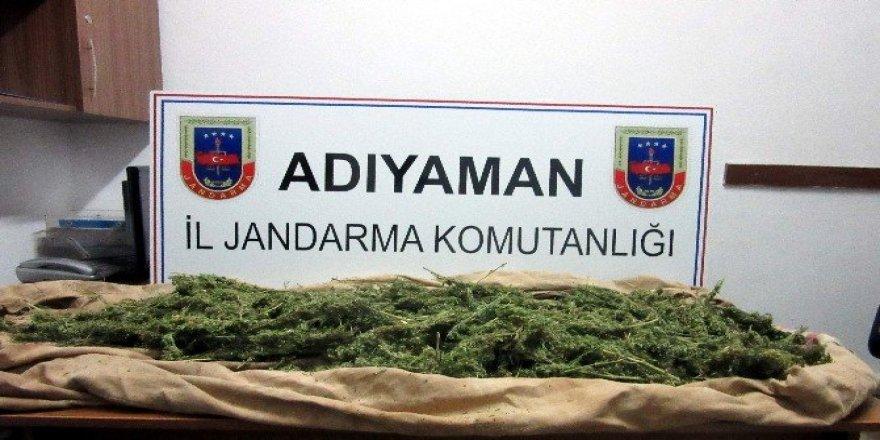 Adıyaman'da bin 217 kök kenevir bitkisi ele geçirildi