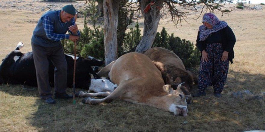 Telef olan ineklerine ağlamışlardı, herkes yardım etmek için Valiliğe yazıyor