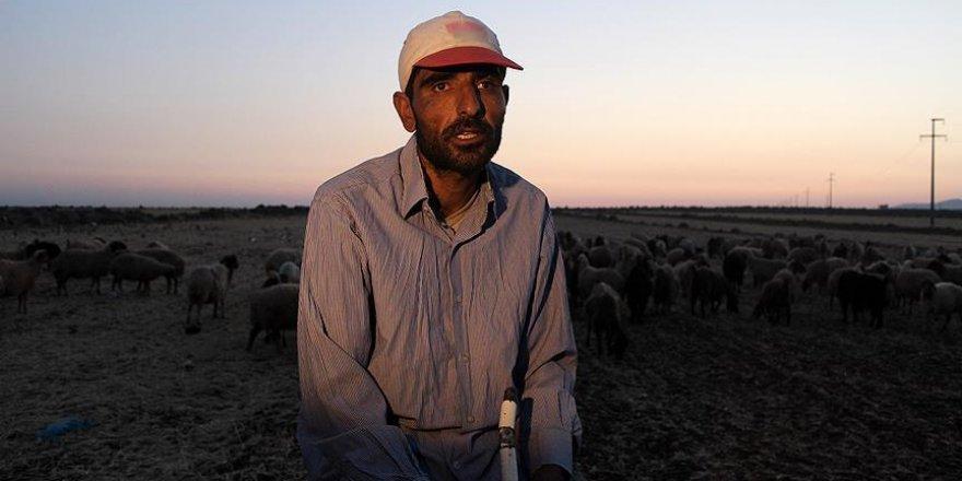 Görme engelli Suriyeli çobanın 'ekmek kavgası'