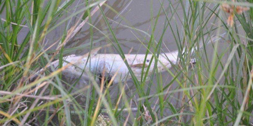 Kızılırmak'taki esrarengiz balık ölümleri korkuttu
