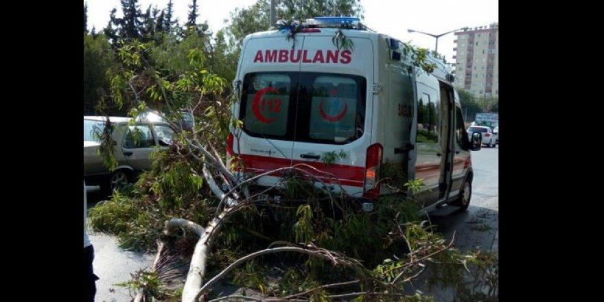 Şiddet gören kadını taşıyan ambulansın üzerine ağaç devrildi