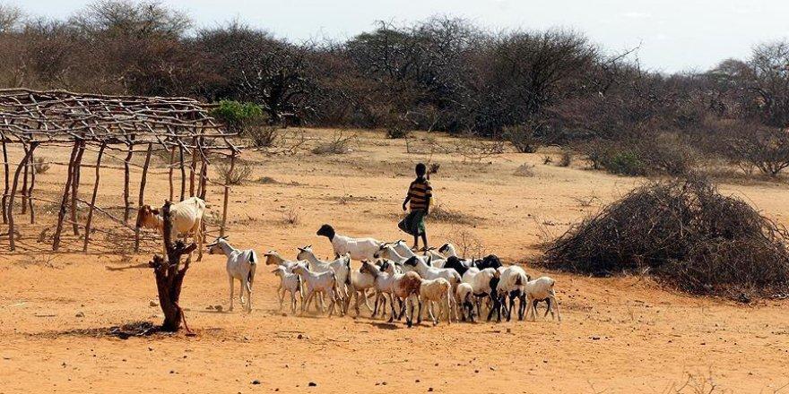 Afrika'nın 'kuraklık stratejisi' hazırlandı