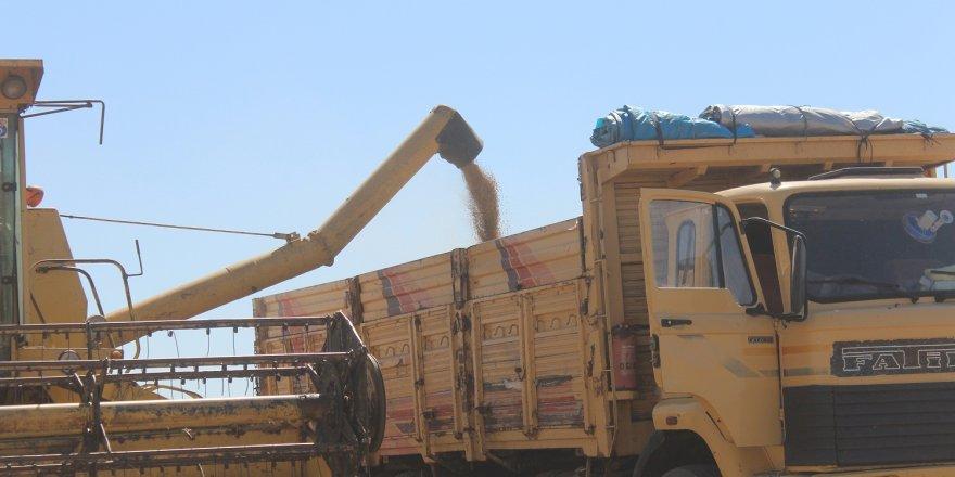 TMO, Konya'da üreticiden 20 bin ton hububat ürünü aldı