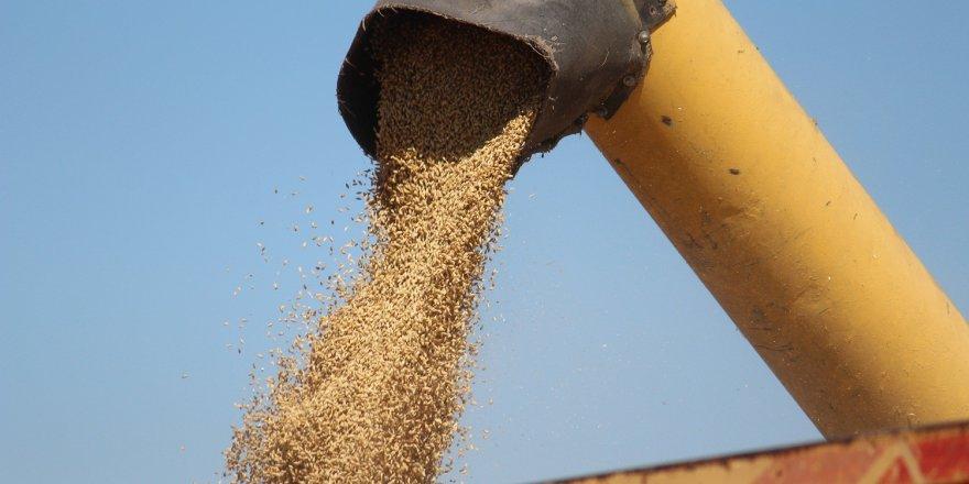 TMO, Seydişehir'de 4 bin ton buğday alımı yaptı