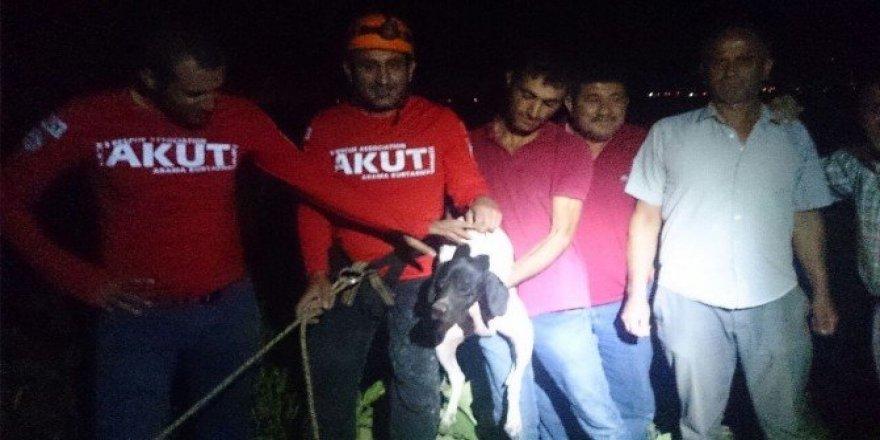 Kuyuya düşen Av köpeğini AKUT kurtardı