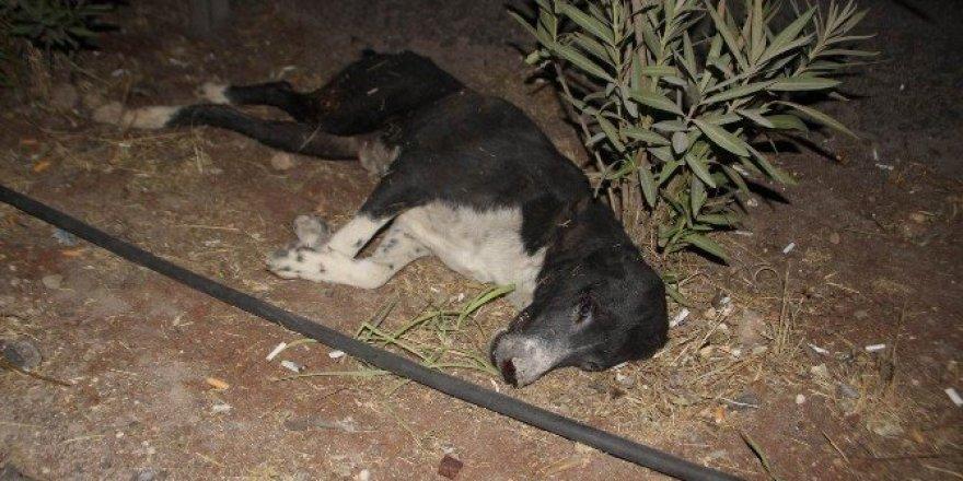 Yaralı köpeği almaya gelen olmayınca öldü