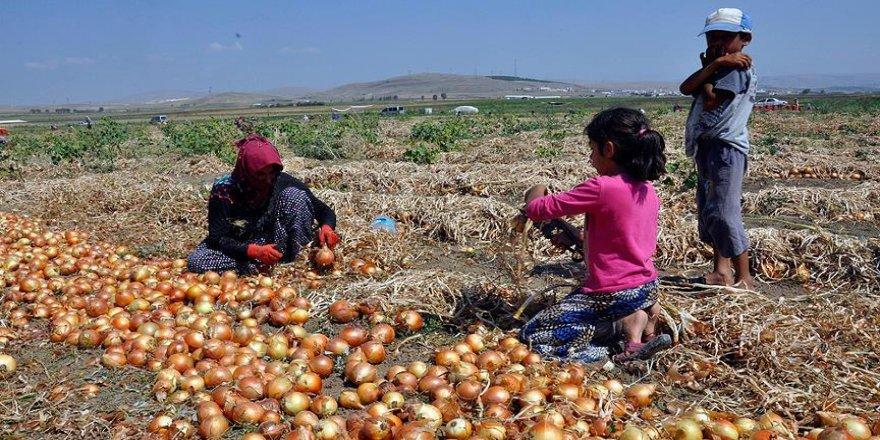 Soğan üreticisinin umudu ihracatta