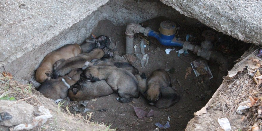 Su saati içindeki 12 köpek yavrusuna ilgi